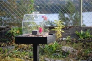 Fuglebrett #Twilight fra #Nelson garden