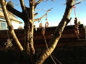 #Epler som fuglemat