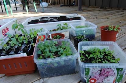#best å plante i