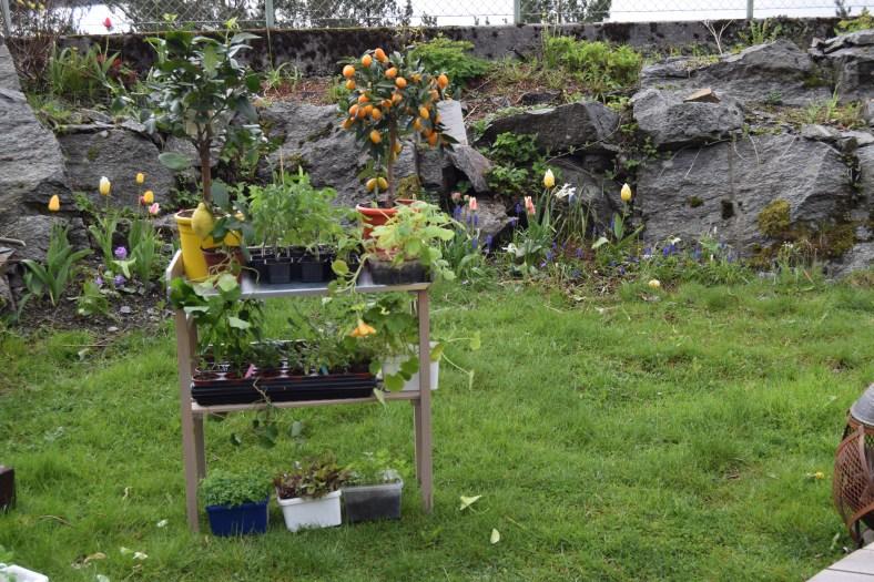 Plantebord fra Europris
